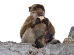 Affen Mutti